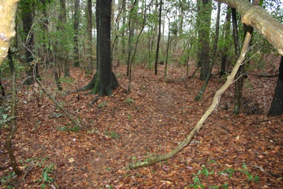 Here you can see the type of woods containing the trail